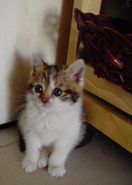 gatiña1