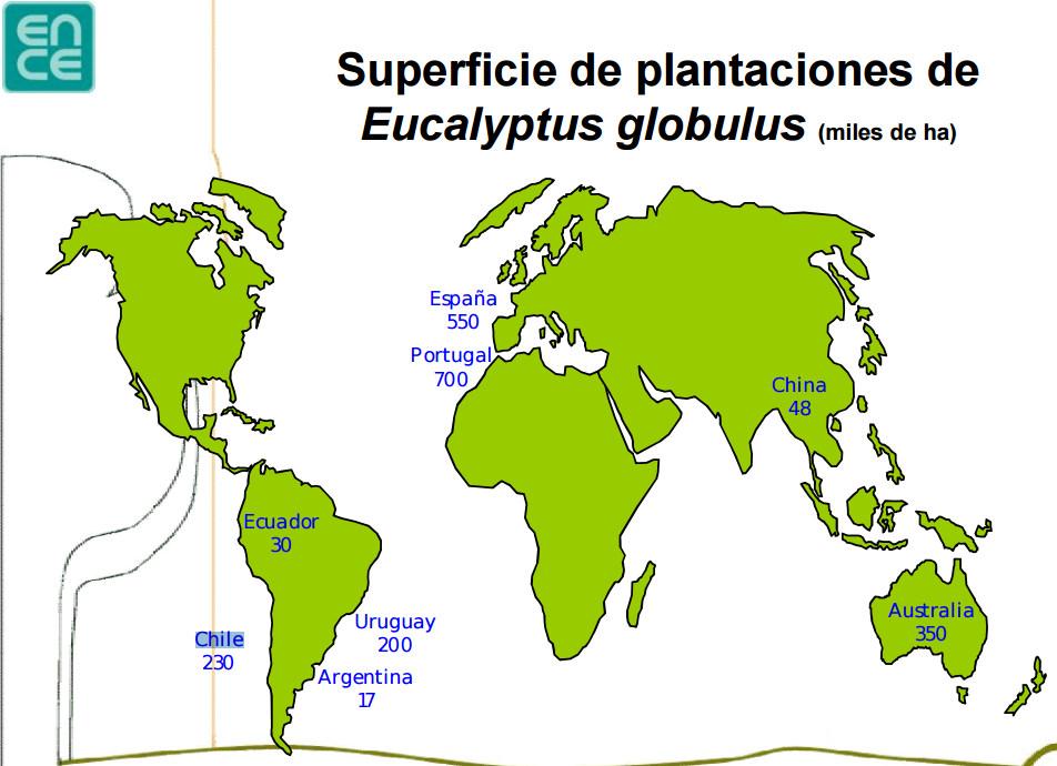 eucalipto mundo